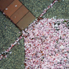 Cherry Flowers on Ground