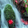 Decorated Waterfall